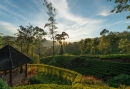 2835556-ceylon-tea-trails-hill-country-sri-lanka