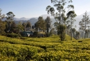 2835519-ceylon-tea-trails-hill-country-sri-lanka